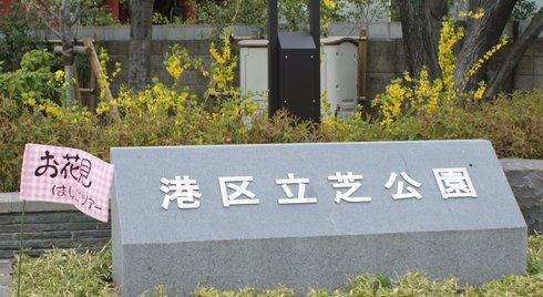 20080331sakura01